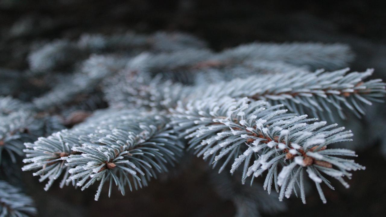 A Christmas Story Pics