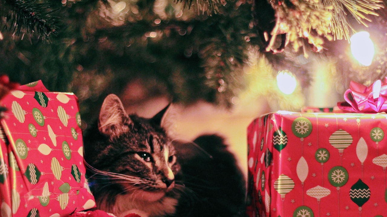 Christmas Cat Images
