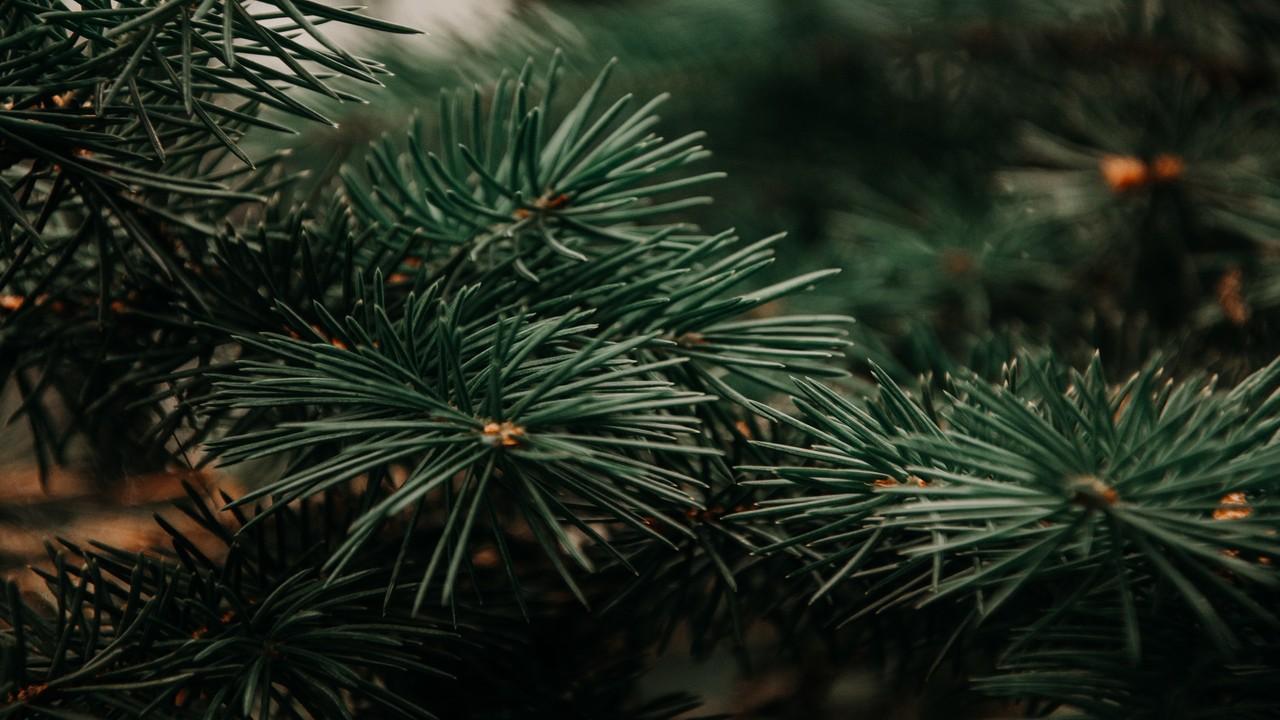 Christmas Tree Rash