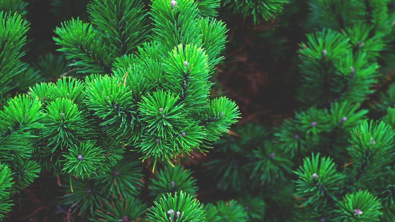 Christmas Tree Images Pictures Photos Collection 2018
