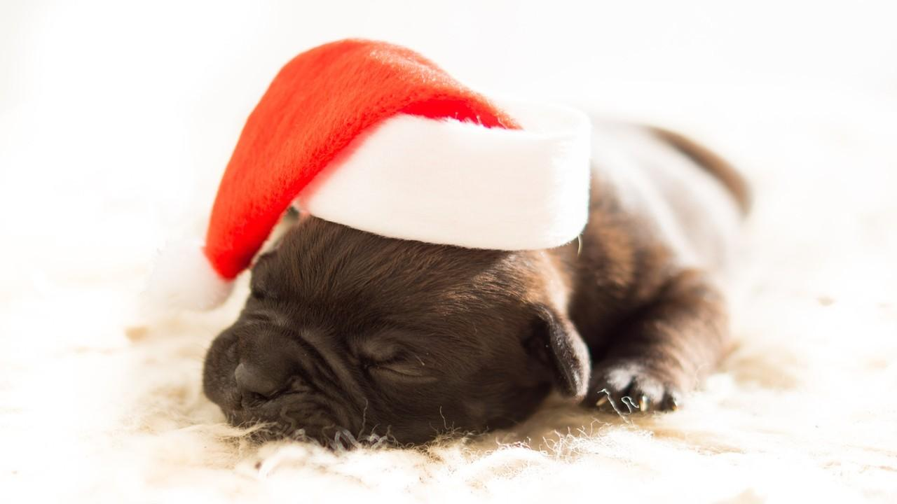 Funny Christmas Dog Photos