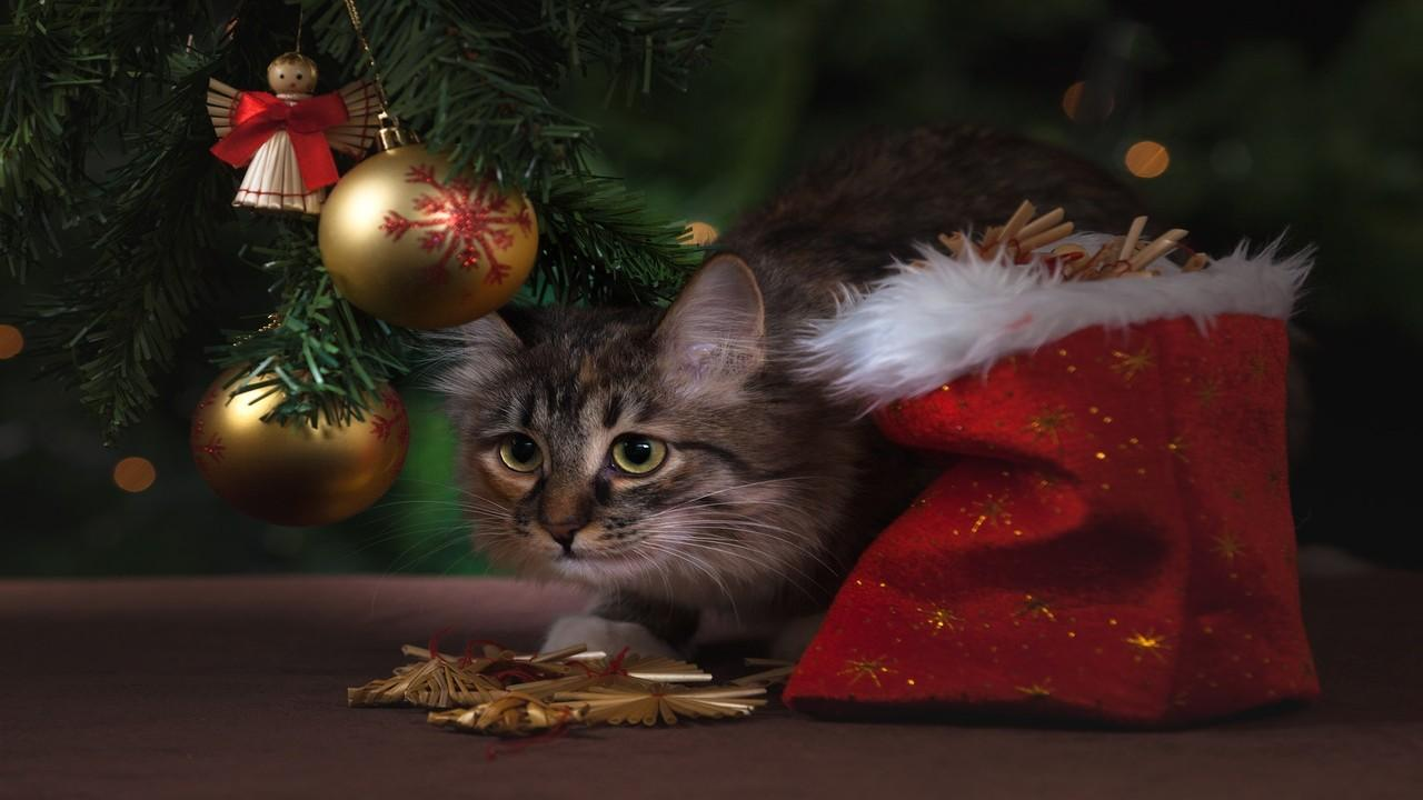 Led B Christmas B Tree