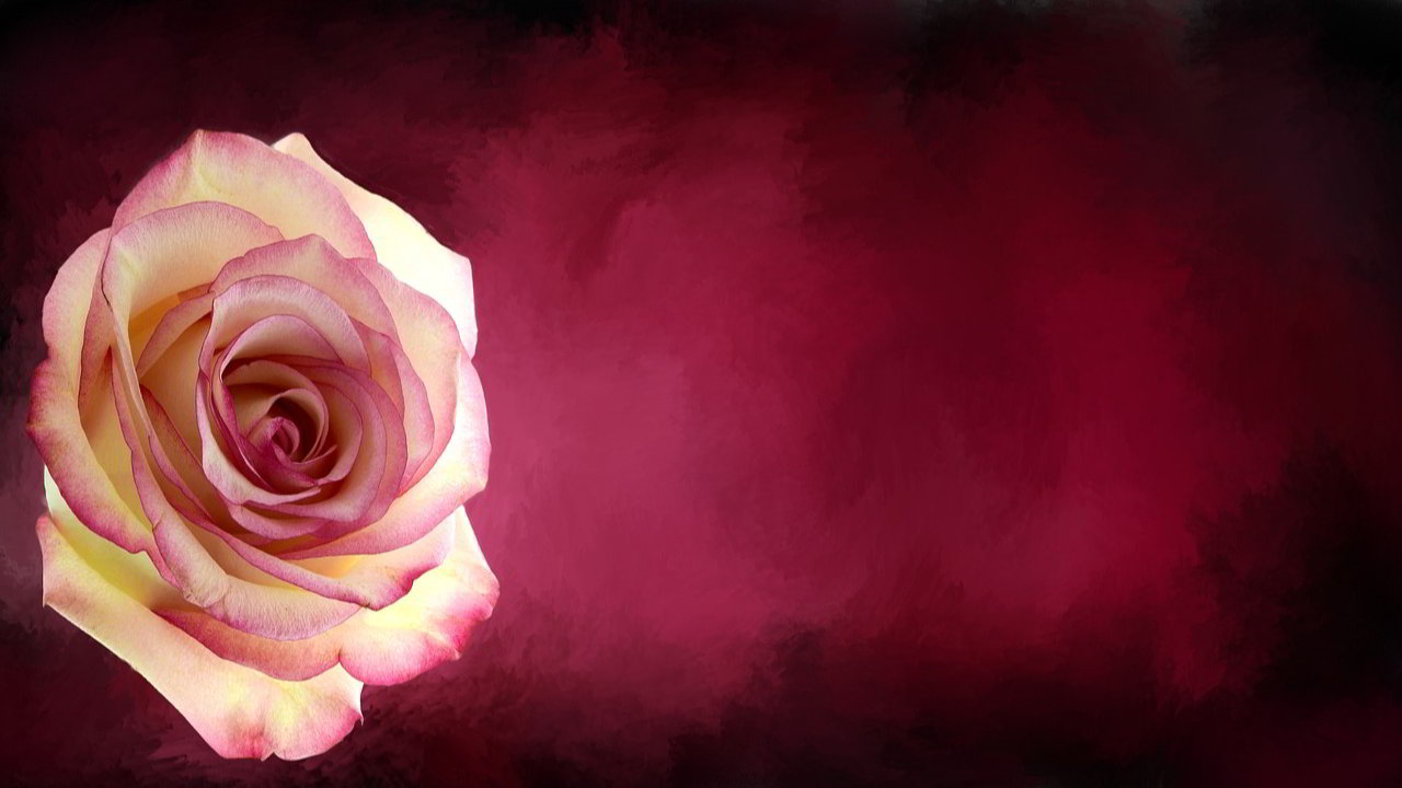 Rose Day Status For Friends