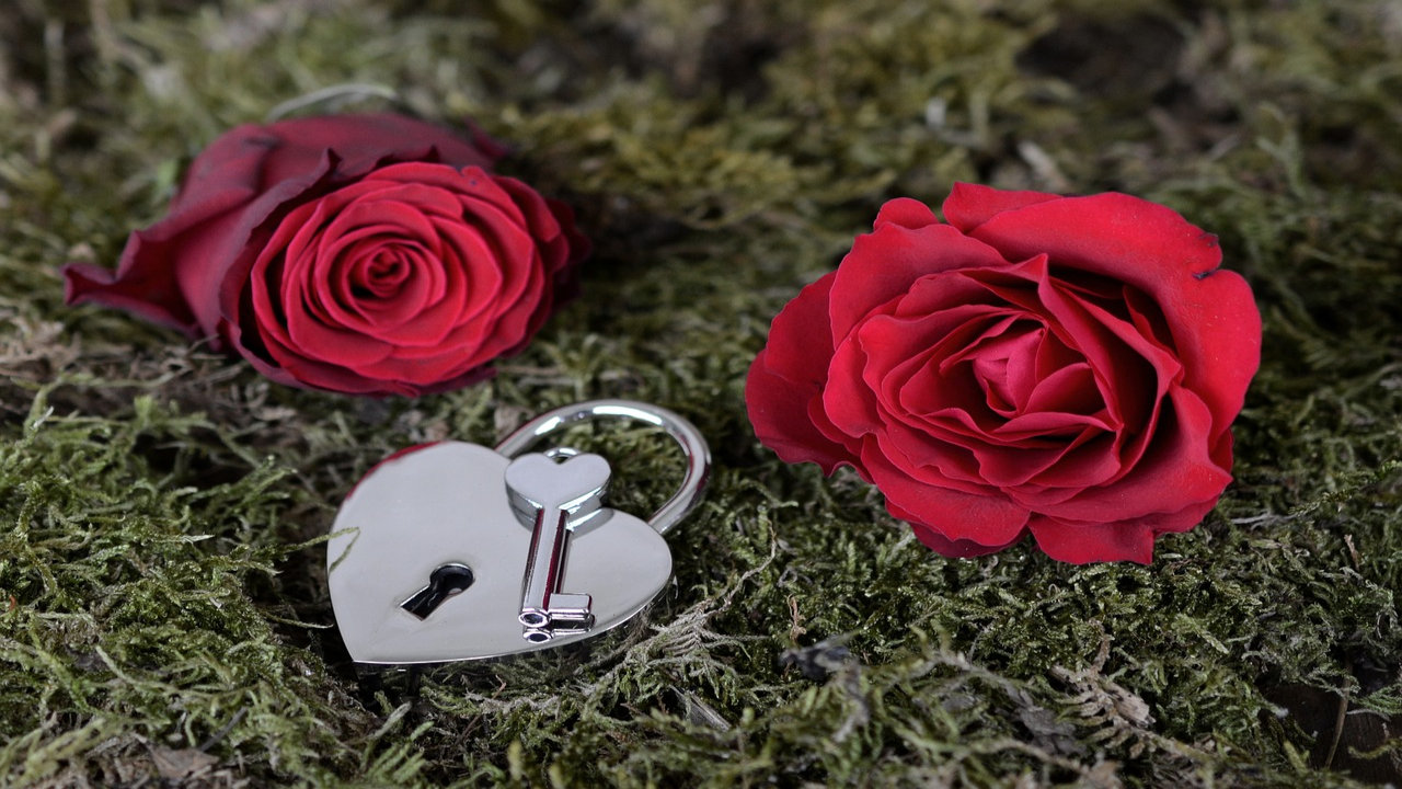 Download Photos Of Rose Day