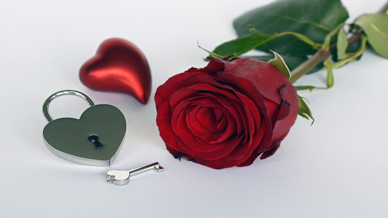 Rose Day 2019 Images