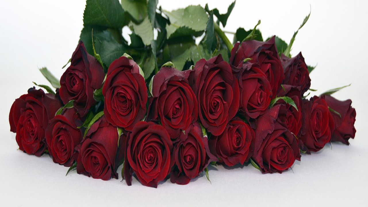 Rose Day Best Images