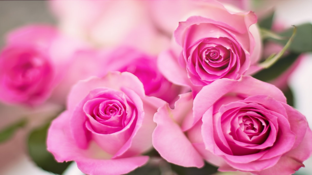 Rose Day Special Pics
