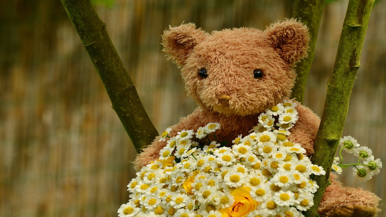 Teddy Bear Day Images Hd