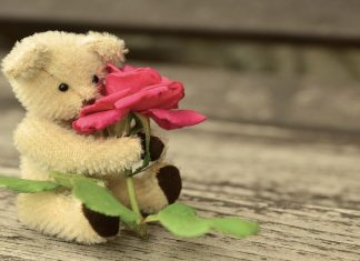 Teddy Day Images Free Download